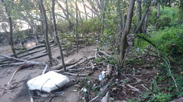 Mangrove au sud des Botanic Gardens, Brisbane, avec plein de déchets ramenés par l'eau
