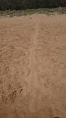 Trace de tortue adulte remontée en haut de la plage pour pondre - Mon Repos