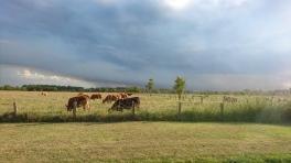 Un orage qui arrive sur Crowdy Bay National Park