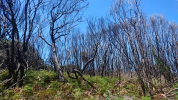 La forêt qui reprend ses droits après un incendie - Ben Boyd National Park
