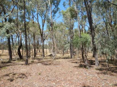 Mulligans Flat Woodland Sanctuary