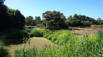 Lac couvert de lentilles d'eau, Royal Botanic Gardens, Melbourne