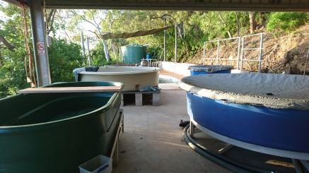 Turtle Rehabilitation Centre, Quoin Island