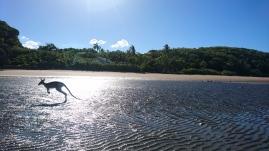 Le resort à marée basse, Quoin Island