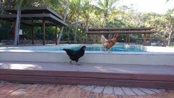 ... vont d'abord à la piscine...