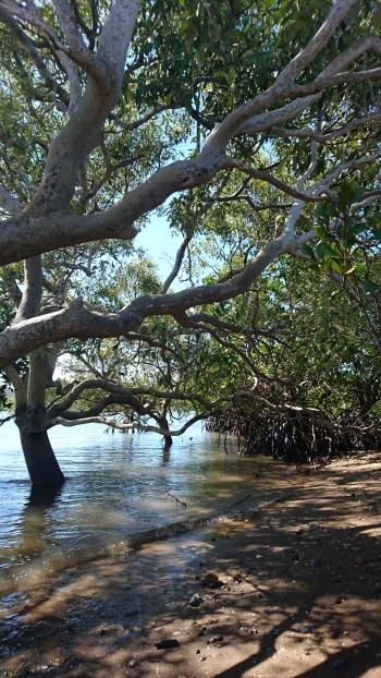 Mangrove, Quoin Island