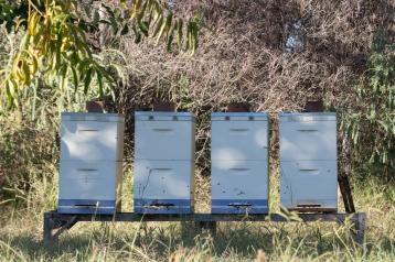 Les ruches, Murrnong, Violet Town