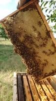 Sous chaque capsule, une alvéole pleine de miel. Murrnong, Violet Town