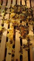Intérieur d'une ruche, Murrnong, Violet Town