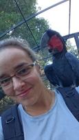 Microglosse, Probosciger aterrimus, Adelaide zoo. Oiseau né sauvage dans le Queensland mais rendu incapable de voler suite à un accident de voiture, gardé en captivité depuis car il est impossible de le relâcher. Visiblement il s'est bien adapté, même s'il s'ennuie car sa femelle est malade et donc isolée en ce moment.
