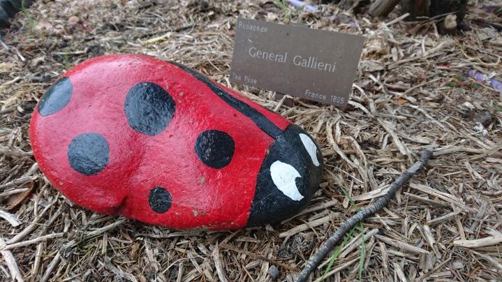Qui aurait cru que Gallieni était une coccinelle ? Botanic Garden, Geelong