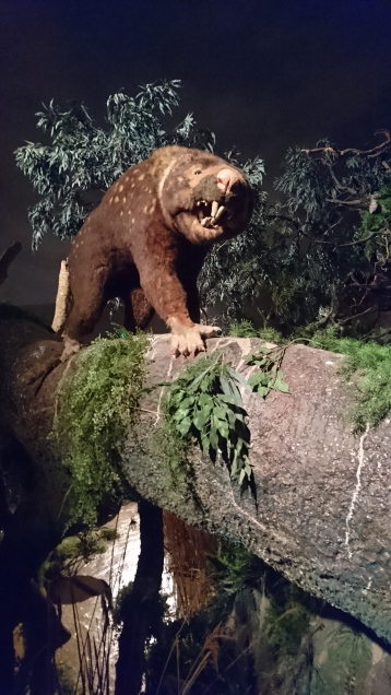 Lion marsupial, Thylacoleo carnifex, Naracoorte Caves National Park