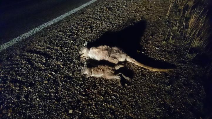 Sur le bord de la route en Australie méridionale