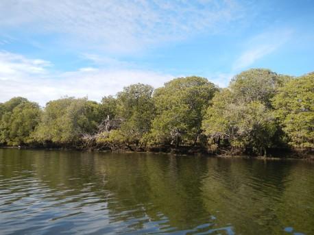 Mangrove, Port Adelaide Dolphin Sanctuary