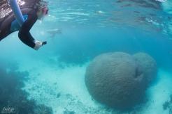 Snorkelling Ningaloo Reef. Copyright SeaLife Differently