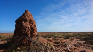 Une termitière parmi des milliers, WA