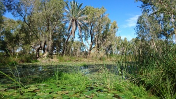 Wetlands walk, Chichester National Park