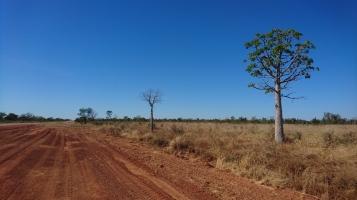 Baobabs, Great Northern Highway, WA