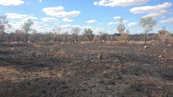 Après (et ça fume encore) un bushfire, WA