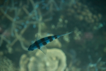 Depuis le bateau à fond de verre, Ningaloo Reef