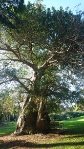 Darwin Botanic Gardens