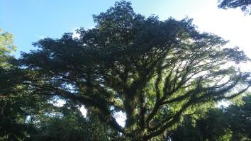 Botanic Gardens, Cairns