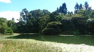 Australian Platypus Park, milieu totalement naturel avec une assez grande population d'ornithorynques