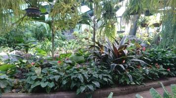 Serre des Botanic Gardens, Cairns