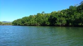 Cooper Creek, Daintree Rainforest
