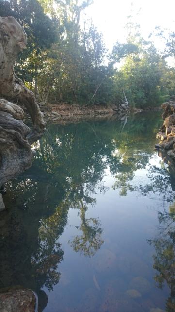 Cardwell spa pool, piscine naturelle dans laquelle on peut se baigner s'il y a suffisamment d'eau pour qu'elle ne stagne pas