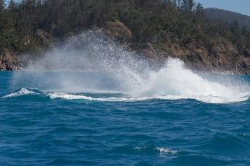 Gros splash de baleine à bosse (j'ai raté le saut), Megaptera novaeangliae, Whitsundays