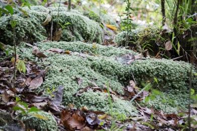 Mossman Gorge, Daintree Rainforest