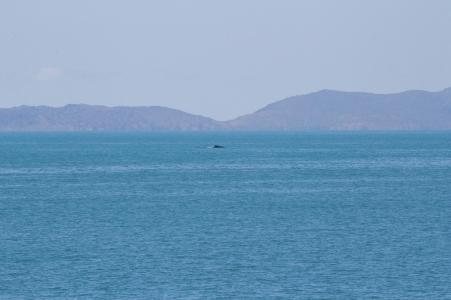Baleine droit devant ! Magnetic Island