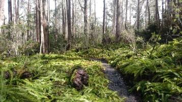 Autour du lac St Clair, Cradle Mountain Lake St Clair National Park, Tasmania